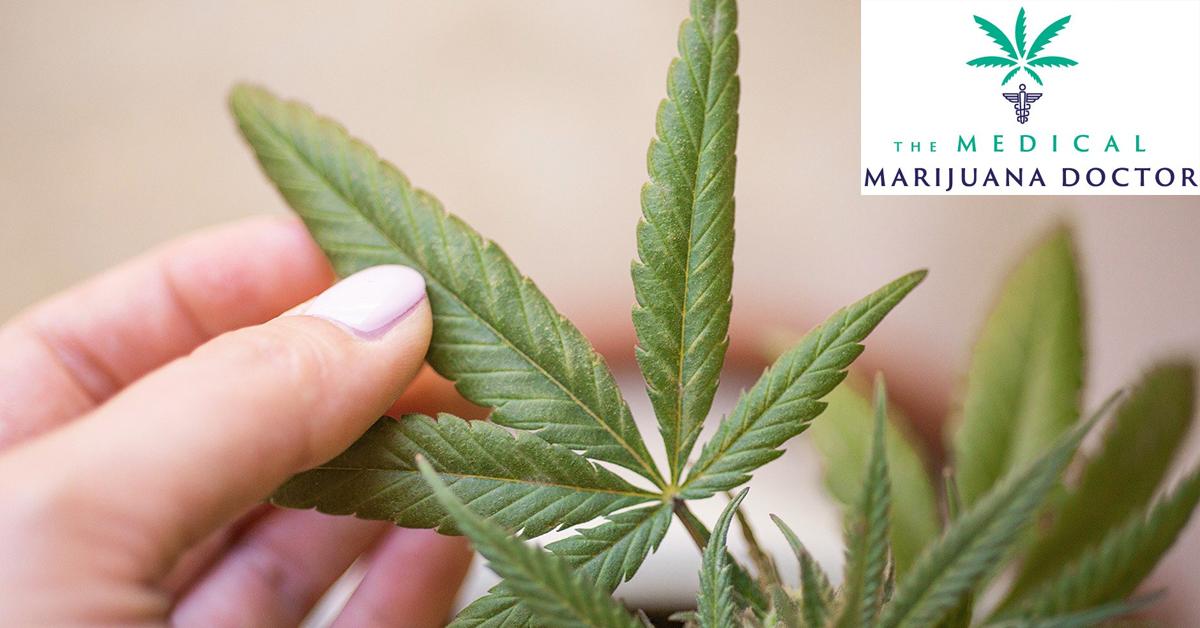 Medical marijuana cost