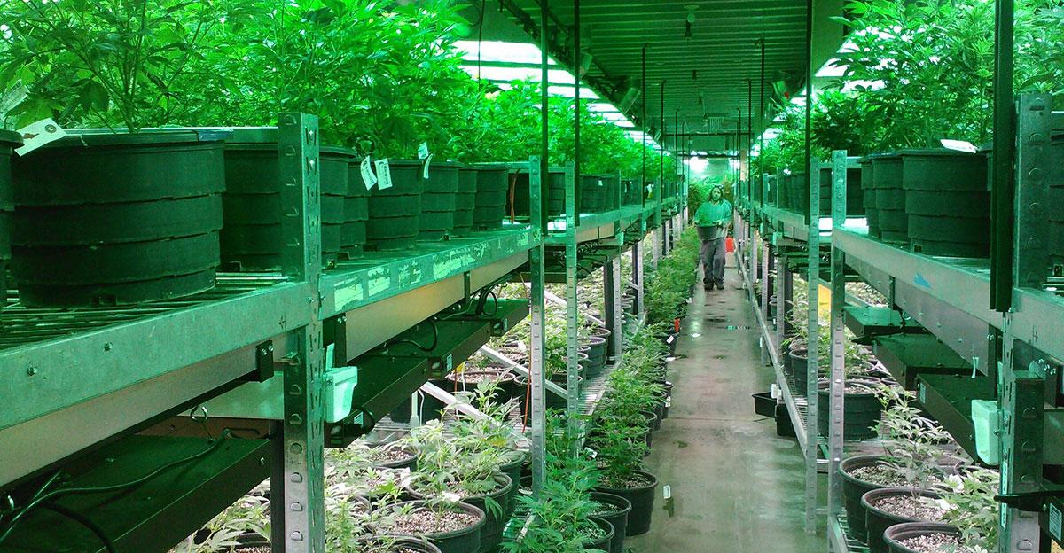 medical marijuana dispensaries near me